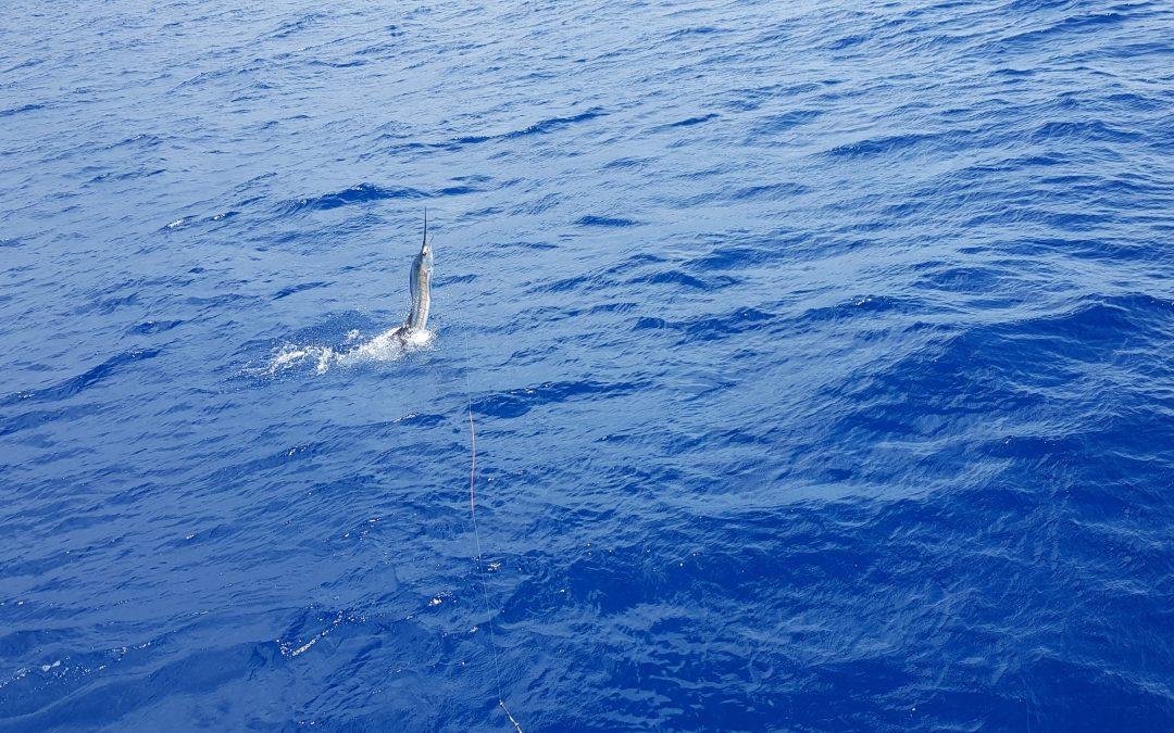 Fishing Quepos Marina pez Vela