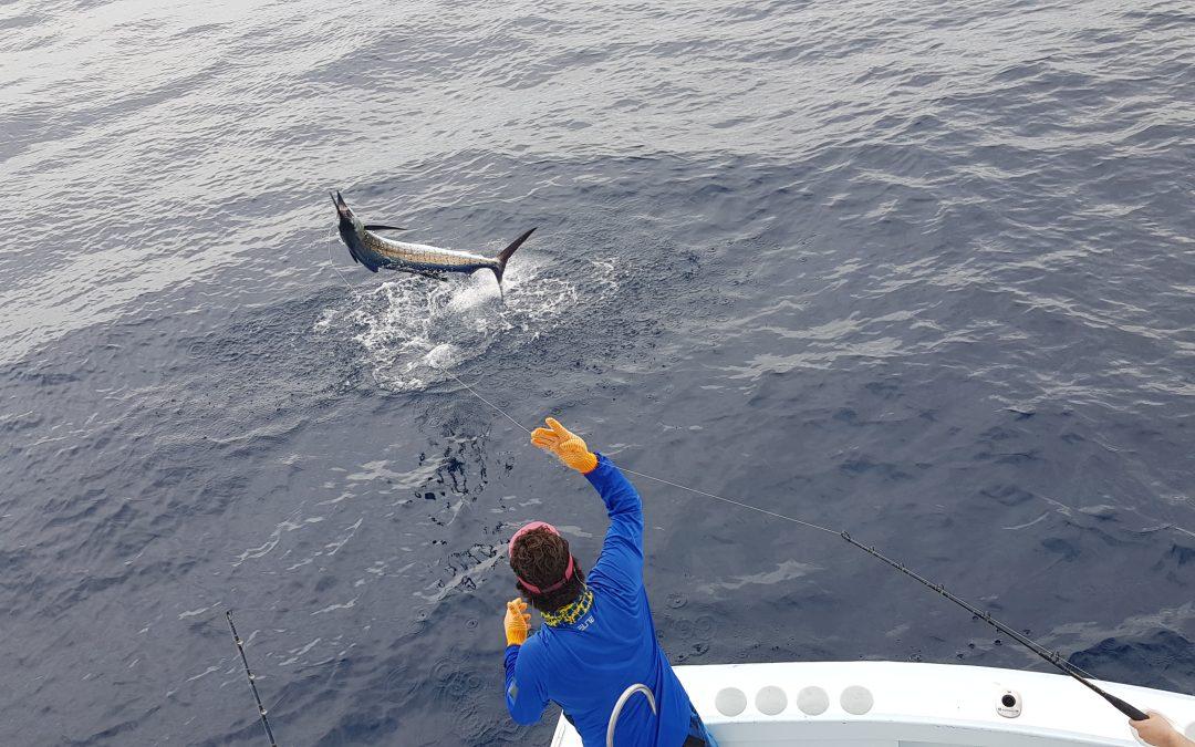 Fishing in August Quepos Marina pez Vela