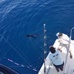 The tuna keeps me busy !! Marina Pez Vela Quepos ,Costa Rica .