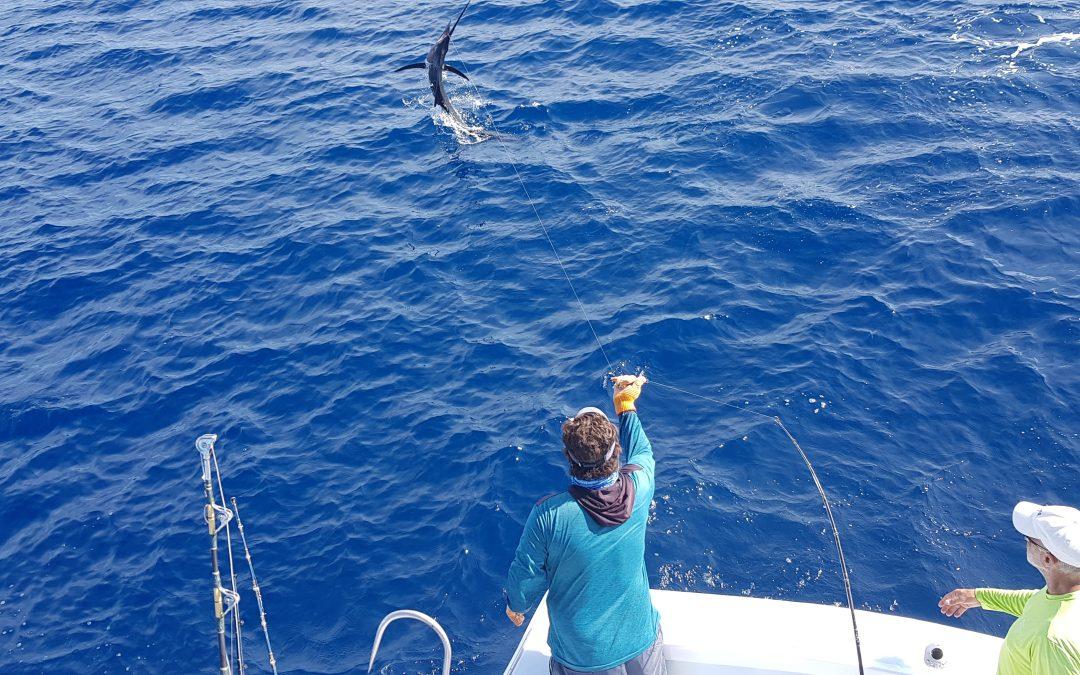 Jan 3, 2019 Sailfish and Yellowfin Tuna