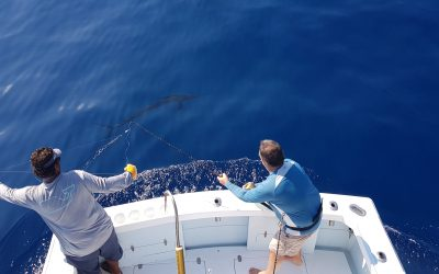 "Sailfish ""On the Fly"" and Mahi Mahi"