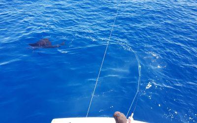 Costa Rica Fly Fishing Jan 16, 2019