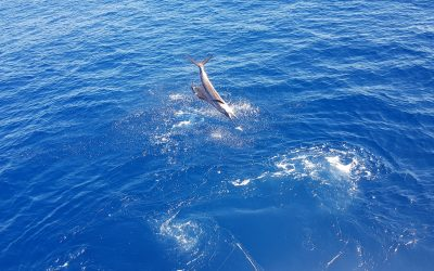 Quepos Fishing Report Jan 22 2019