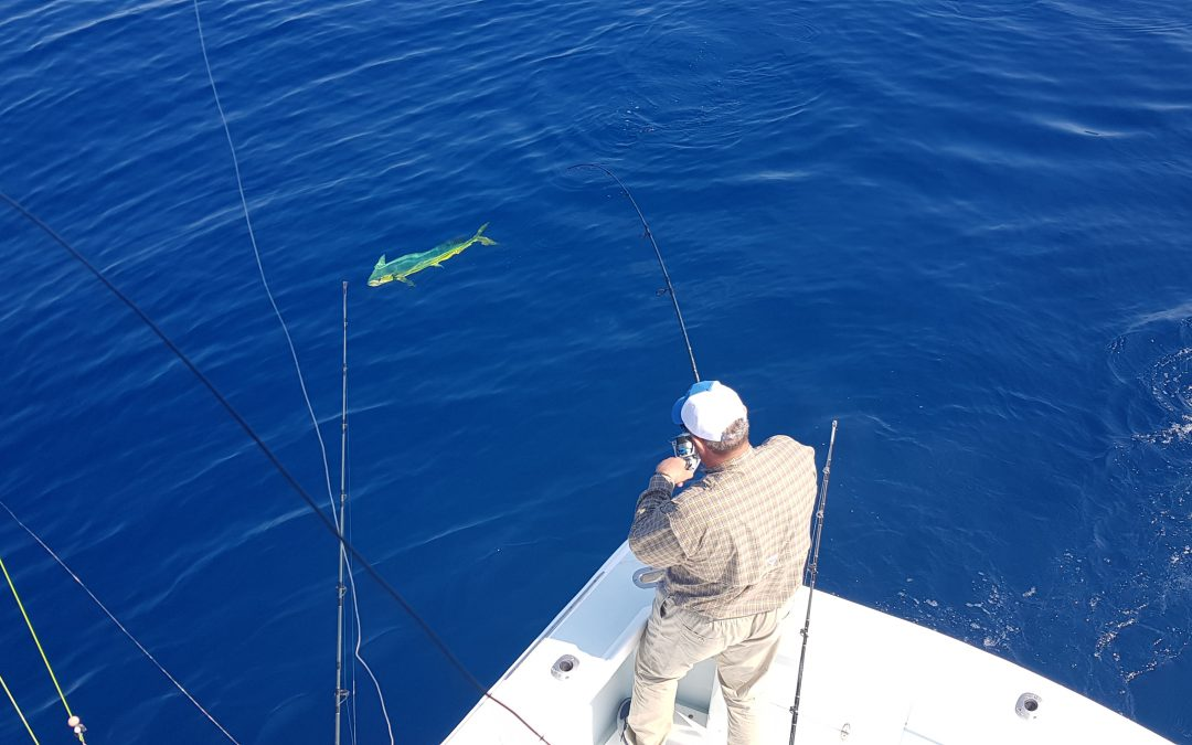 Fly Fishing for Sailfish & Mahi Mahi
