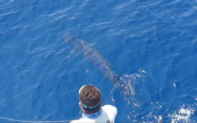 Feb 22 Sailfish & Blue Marlin