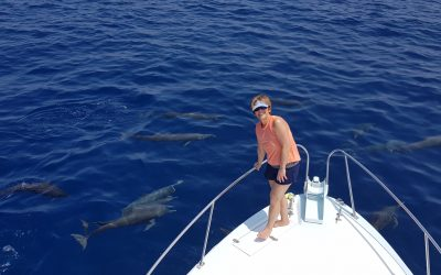 Sailfish number are picking up again in Costa Rica!!