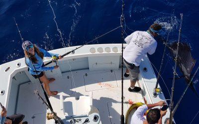 Sailfish, Mahi Mahi and Yellowfin Tuna.  Another GREAT day!