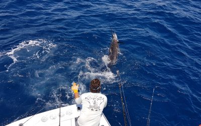 May Fishing for Sailfish and Dorado. Quepos, Costa Rica