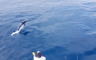 November 6, 2019 – Blue Marlin and Dinner in Costa Rica