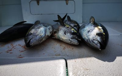 December 28, 2019 – Mixed Bag Fishing Quepos, Costa Rica