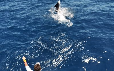 February 21, 2020 – 5 sailfish Quepos, Costa Rica
