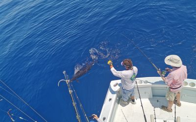 March 4, 2020 – Sailfish and Yellowfin Tuna Fishing Costa Rica