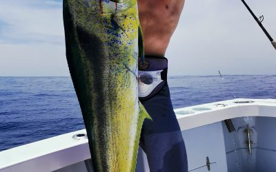 May 3, 2020 – Dorado, sailfish, yellowfin tuna Quepos Costa Rica