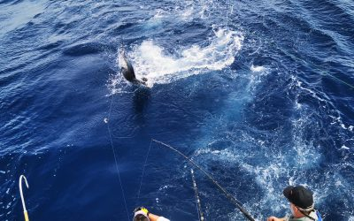 Costa Rica Marlin Fishing with Big Eye 2 – June 10, 2020