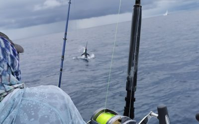 "Yellowfin Tuna and Sailfish ""On the Fly"" with Big Eye Charters"