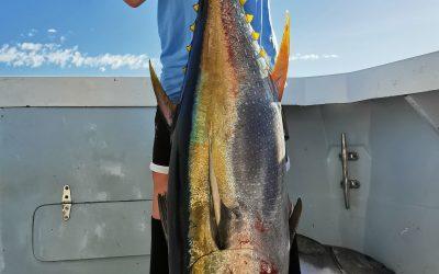 Great Tuna Fishing for Tuna out of Marina Pez Vela Nov 22 2020