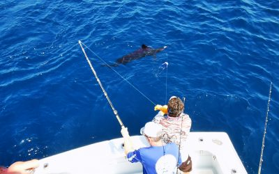 Sailfish Action Offshore Quepos with Big Eye 2 Feb 15, 2021