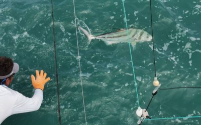 Top Roosterfish Charters