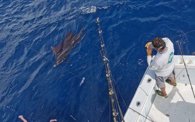 Best Costa Rica Offshore Billfish