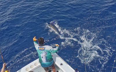 Costa Rica Striped Marlin, Sailfish and Mahi Mahi