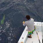 quepos marlin release